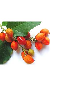 peanut fruit